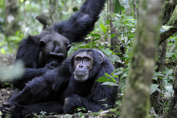 4 Days Fly in Double tracking Gorilla safari
