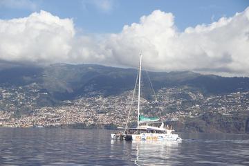 Avvistamento di balene e delfini da Funchal