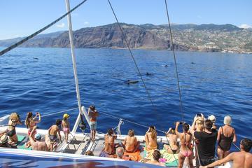 Cruzeiro de catamarã para observação de baleias e golfinhos saindo de...