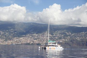 Dolphin Spotting and Whale Watching from Funchal