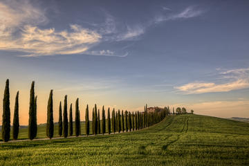 Private Tour: Medieval Val d'Orcia by Minivan from Florence