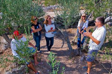 Aceite de oliva por Isla Solta