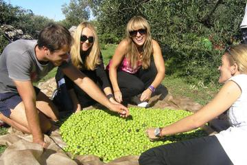Private Tour: Olive Picking in Solta...