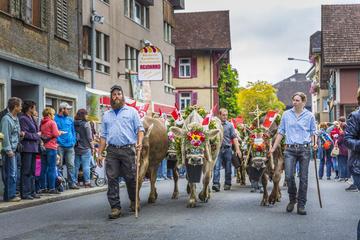 Swiss Cow Parade - Alpine Festival