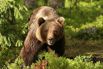 Full Day Tour of Dracula's, LiBEARty Brown Bear Sanctuary, Brasov...