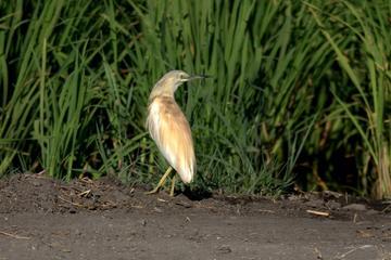 Visita privada de observación de aves en el parque nacional de la...