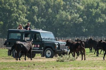 3heures de safari en Camargue en 4x4 depuis Le Grau du Roi