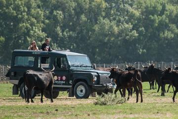 Camargue 4x4 Safari from Aigues...