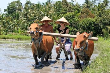 Excursão da vida diária balinesa: viva como um fazendeiro