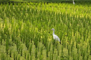 Padlock of Love and Birds Village
