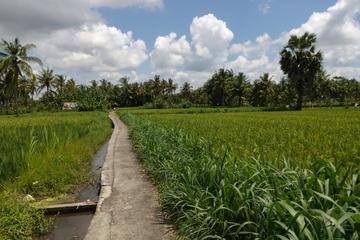Rice field trekking and The Waterfall