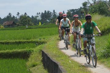 Ricefield Electric Biking