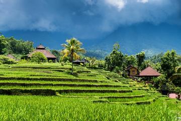 Trektocht naar de rijstvelden van Ubud