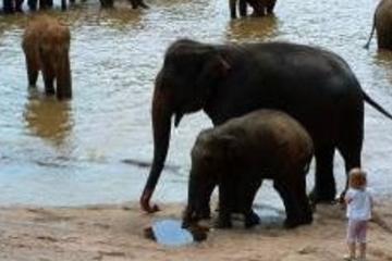 Excursion classique de 5jours au Sri Lanka