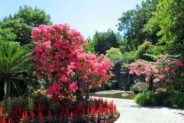 Xiamen Private Day Tour:  Botanical Garden and Jimei School Village