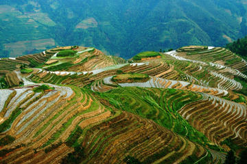 All Inclusive Private Day Tour of Longji Rice Terraces and Minority Village