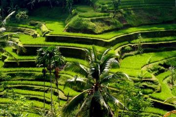 Gita panoramica di un giorno a Bali con visita presso una cittadina
