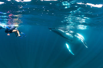 Humpback Whale Interaction Experience from Exmouth on Luxury Sailing Catamaran