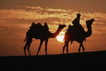 1 Night Camel Safari Tour In Jaisalmer