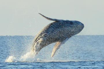 Whale Watching Adventure Hawaii