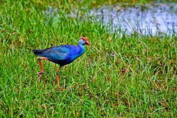 Excursion d'une journée dans les zones humides à Muthurajawela