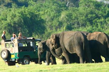 Minneriya National Park Private Jeep...