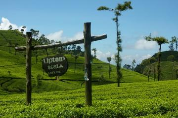 Private Day Tour to Lipton Seat and...