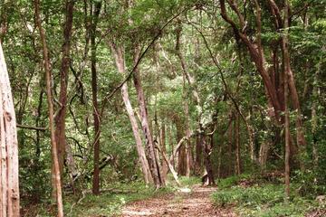 Half-Day Kottawa Arboretum Walking Tour