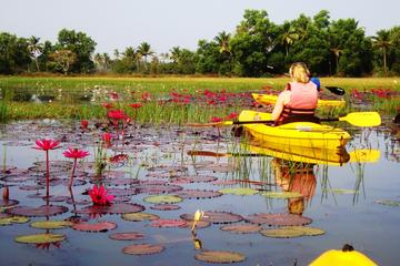 Goa Kayaking Excursion of Sal...