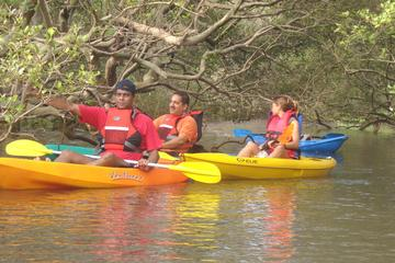 Mangroves Magic Goa Kayaking Experience