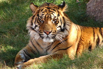 7-Day Independent Tour of Delhi, Agra, Jaipur with Tiger Safari and Private Car