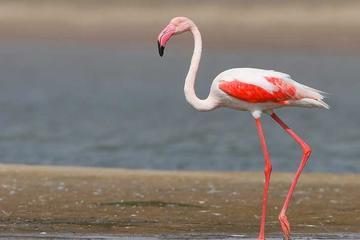 Excursión independiente de 2 días al santuario de aves de Bharatpur y...