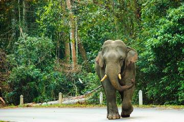 Day Trip to Khao Yai National Park including Elephant Ride