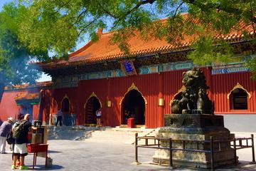 Full Day Historic Beijing Temples Pandas and Palaces