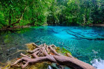 Full Day Krabi Rainforest Discovery Tour