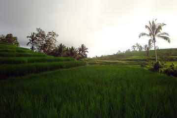 Full Day The North Bali Experience