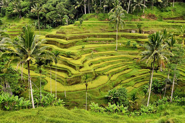 Full-Day Ubud and Beyond Tour Including Lunch