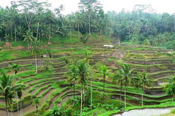Half Day Ubud The Cultural Heart of Bali