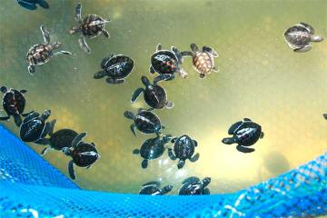 Private Tour: Cherating Turtle Sanctuary Night Tour from Kuantan