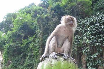 Visite privée : visite des grottes de Batu d'une demi-journée