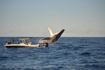 Avistamiento de ballenas en lancha motora en Sídney