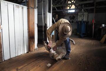 Excursion d'une journée avec expérience dans un élevage de mouton à...