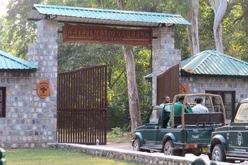 Jungle Safari at Rajaji National Park