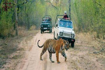 6-Day Private Tour From Delhi to Jaipur includes Ranthambore and Agra...