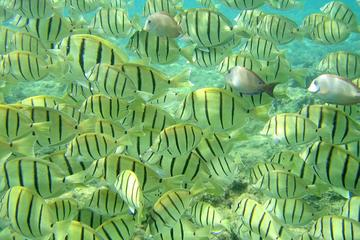 Aventura de turismo y buceo de superficie en la Piedra del Pelícano