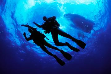 PADI Open Water Diver Certification in Cabo San Lucas