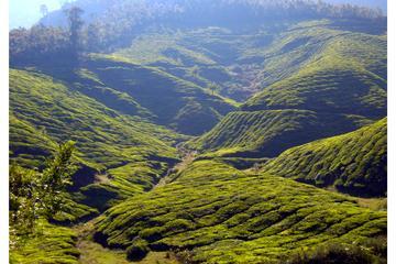 Munnar Trekking Tour