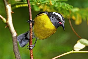 Vogelspottour door St Maarten