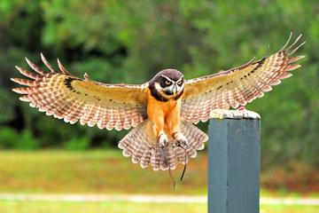 Birds of Prey Guided Tour and Flight Demonstration