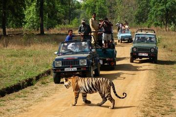 Private 3-Day Ranthambhore Tiger Tour...